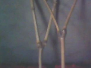 Bambu Cawang langka